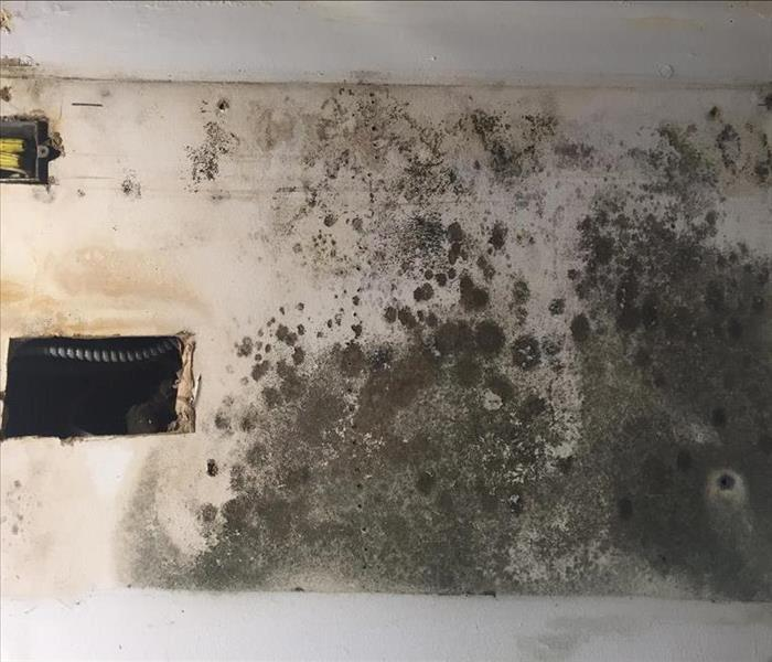 Mold in a Commercial Building