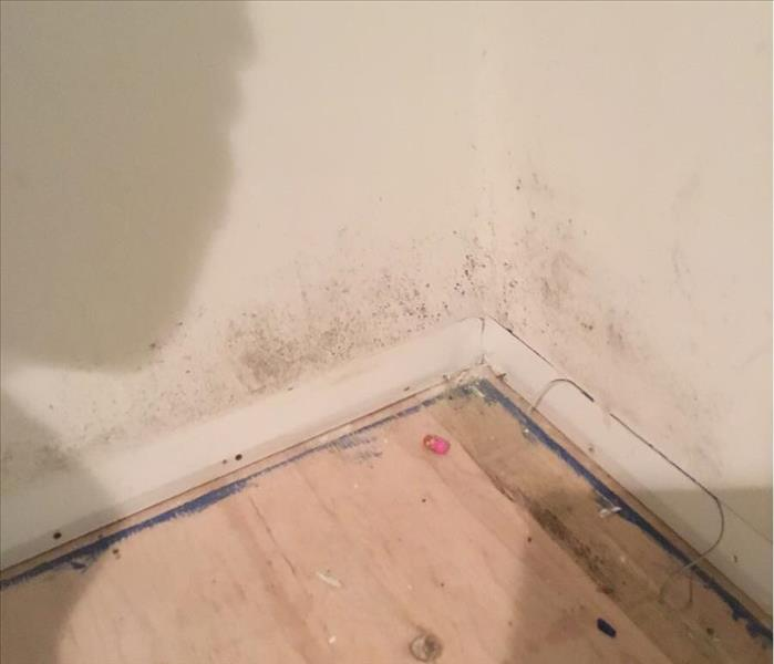 Mold in a Basement in Berkeley Heights, NJ