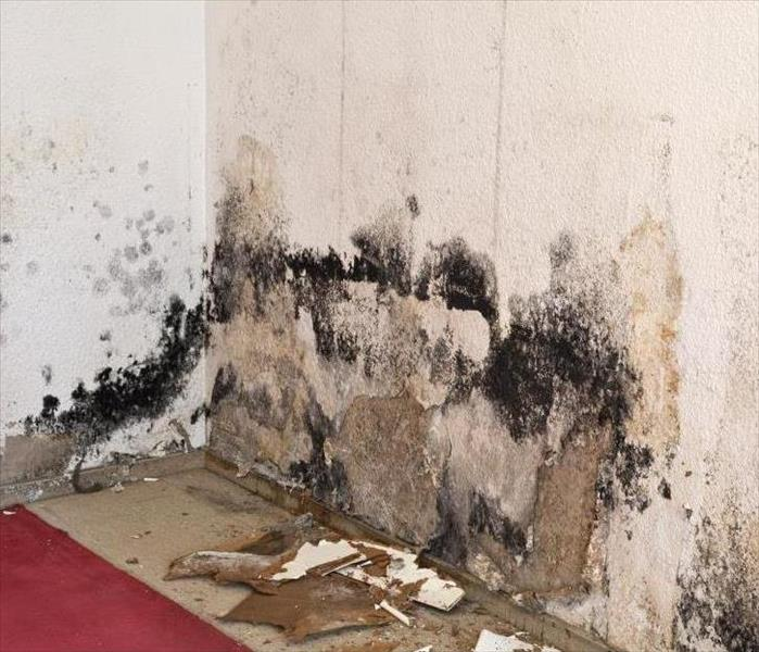 mold damage on a wall with paint peeling